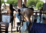Al centro estivo si impara ad andare a cavallo