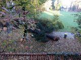 Crolla un pino, chiusa Villa Zoja: verifiche sulla relazione dell'agronomo