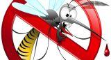 Aumentano le zanzare, come difendersi?