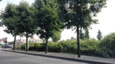 rancatebuio (5).jpg